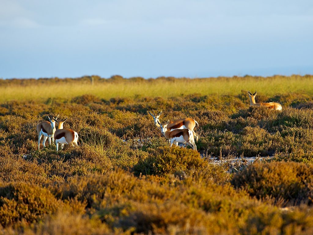 Robben island - wildlife