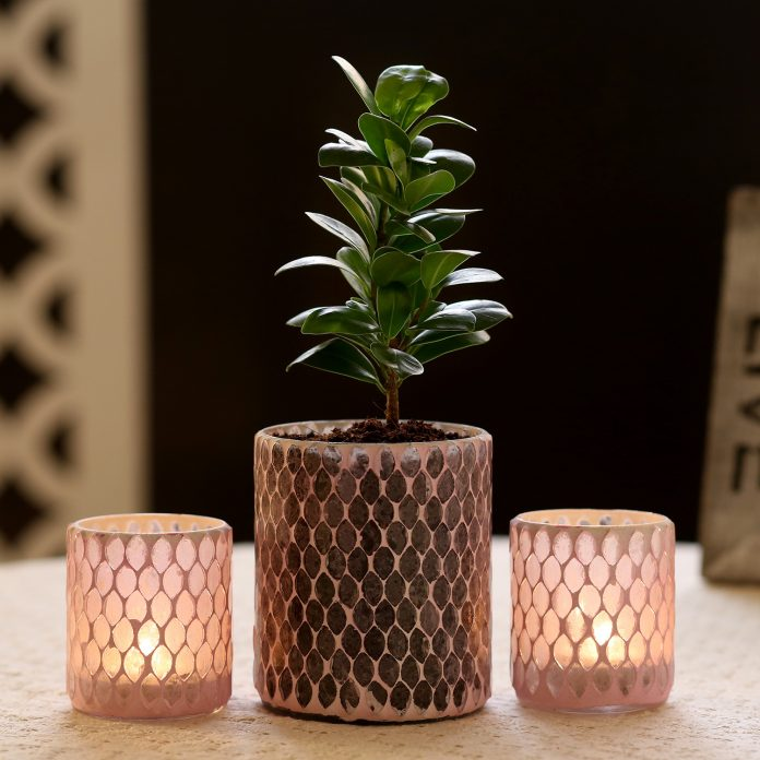 Ficus Compacta In Mosaic Art Glass Pot & candle Holders
