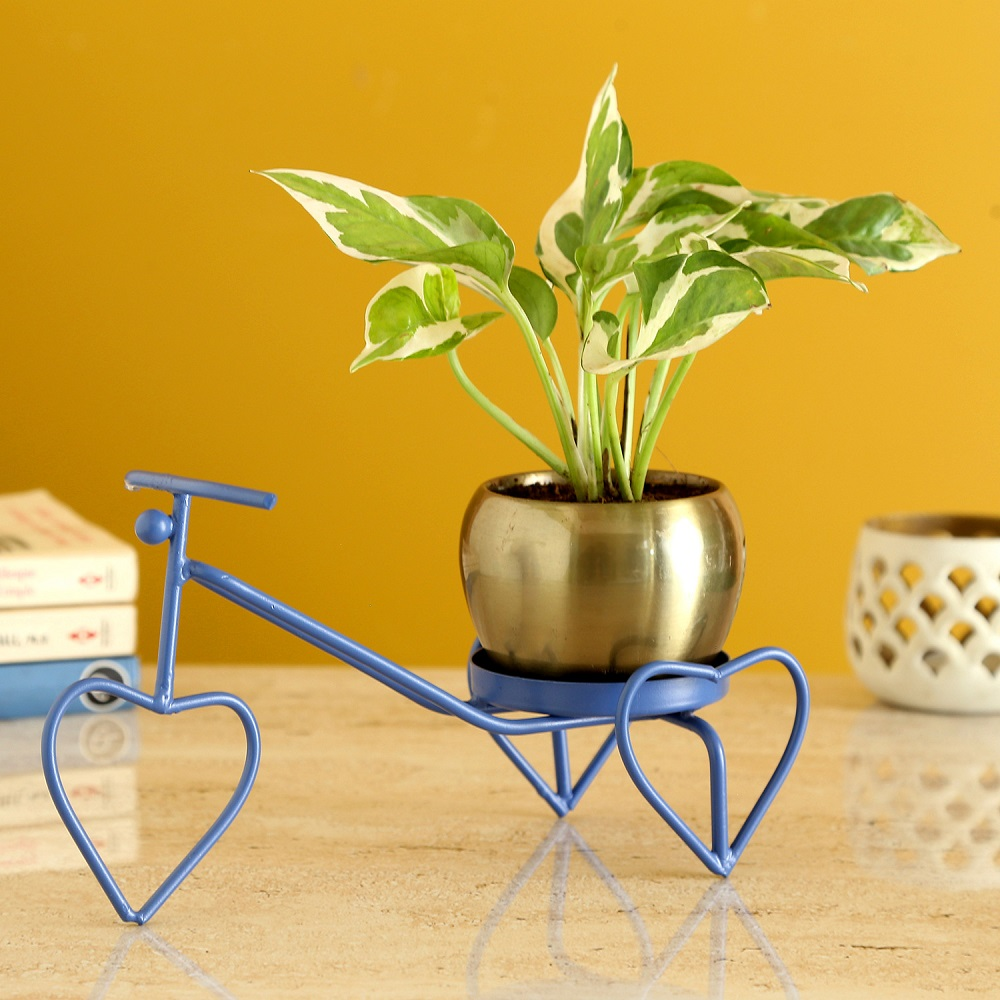 Plant in love cycle