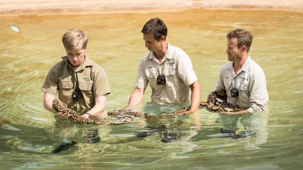 Robert Irwin and zookeepers Nick Kuyper and James Fong get Gloria the reticulated python ready for a swim.